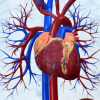 The Heart Disease Myths That Could Kill You